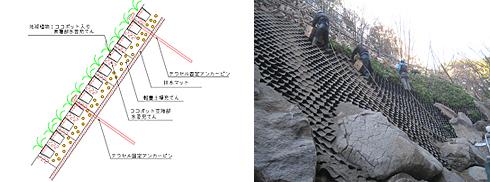 テラセルの構造の図