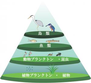 水辺生態系